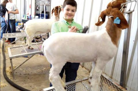 Allen Students do very well at Regional Show