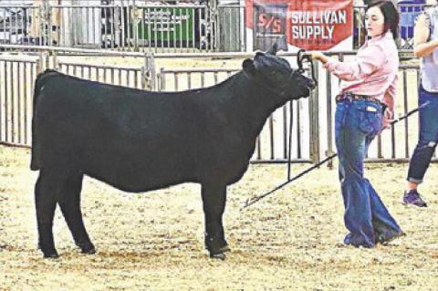 Maycee Howard is new member of American Angus A